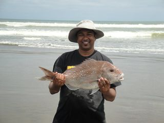 4 Kg Snapper at Muriwai Beach