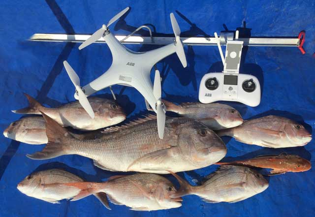 Drone fishing catch, eight snapper and a gurnard